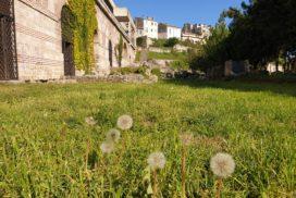 Păpădii în muzeul edificiului portuar Tomis