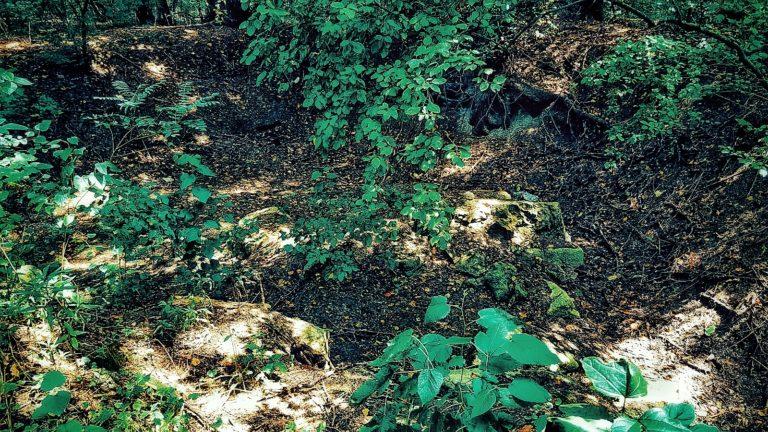 Ruine în vegetație la Păcuiul lui Soare