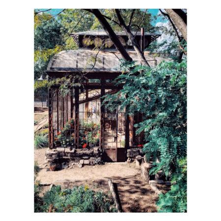 Serele cu plante exotice ale palatului Marincu - prim planlatului Marincu - prim plan