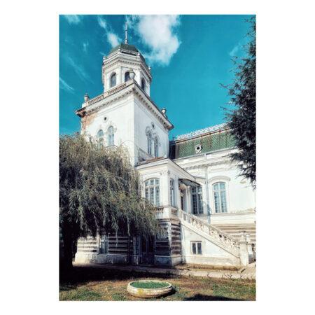 Salcia din curtea palatului Marincu
