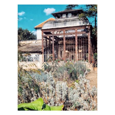 Plantele din grădină și sera palatului Marincu