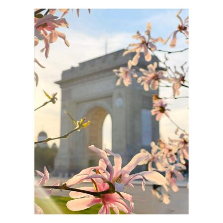 Magnoliile Arcului de Triumf