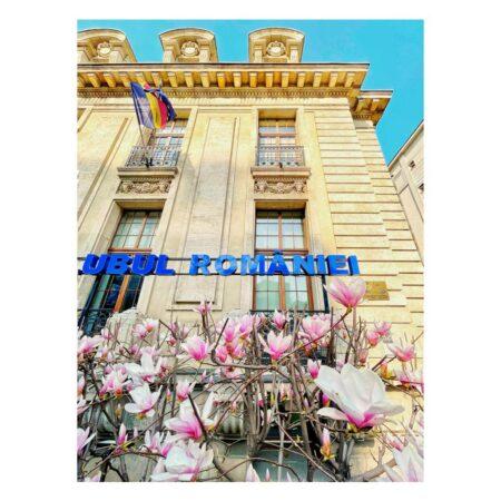 Magnolie - Casa ing. Constantin M. Vasilescu - Lascar Catargiu nr. 54
