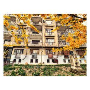 Locuința lui Petre Antonescu - Imobil Intrarea Eftimie Murgu - 5