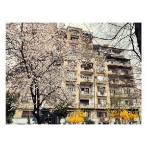 Locuința lui Petre Antonescu - Imobil Intrarea Eftimie Murgu - 7