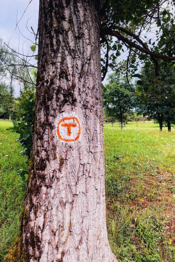 Marker Via Transilvanica copac
