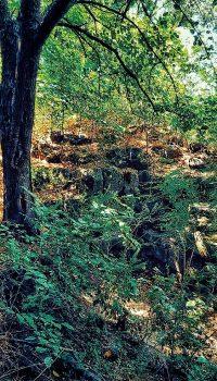 Ruinele cetății Vicina ascunse în vegetație